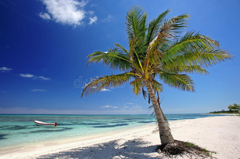 Download Palm Tree at the beach stock image. Image of strand, gebogene - 27942379