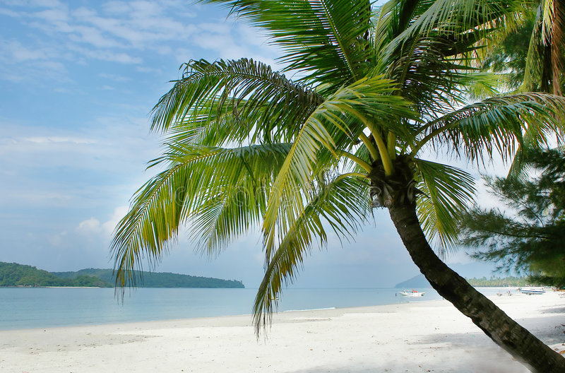 Download Palm tree on beach stock image. Image of destination, relaxing - 5874715