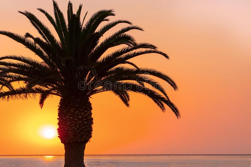 Palm tree  at a beach on the background of a beautiful red sunset and bright sun. Palm tree at a beach on the background of a beautiful red sunset and bright sun stock images