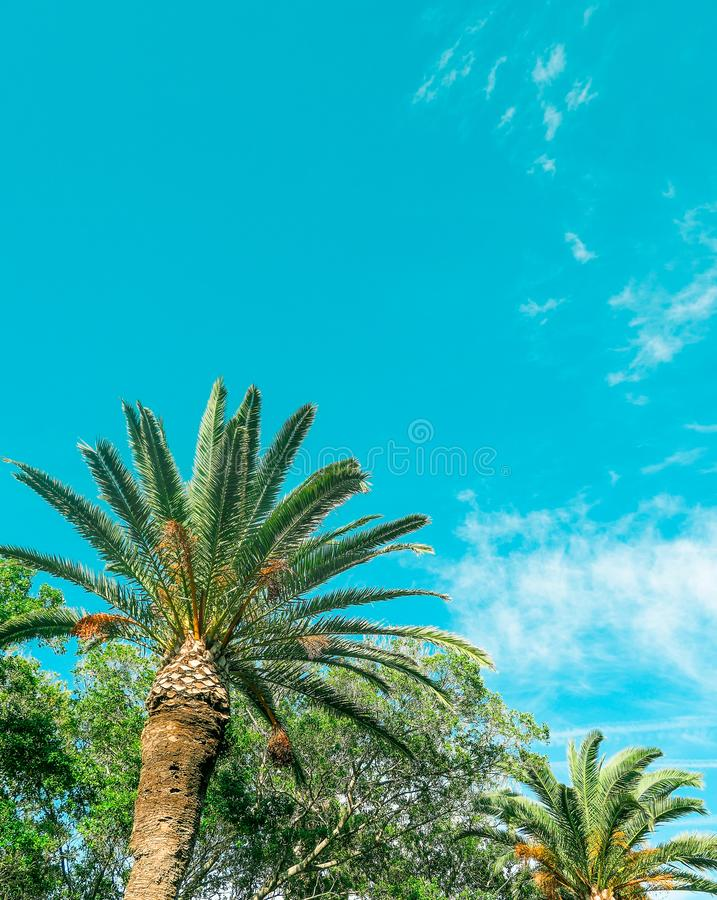Palm tree beach background, summertime travel royalty free stock image