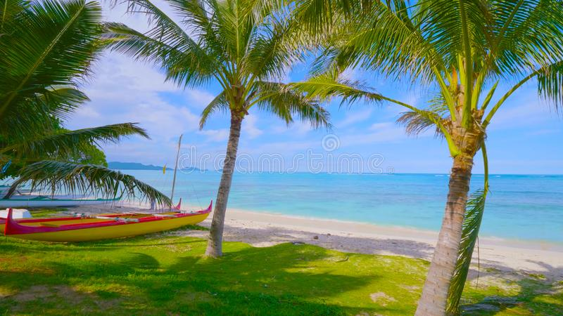 Palm tree on the beach || Beautiful beach. View of nice tropical beach with palms around. Coastline, landscape. in hawaii 2019 stock photo