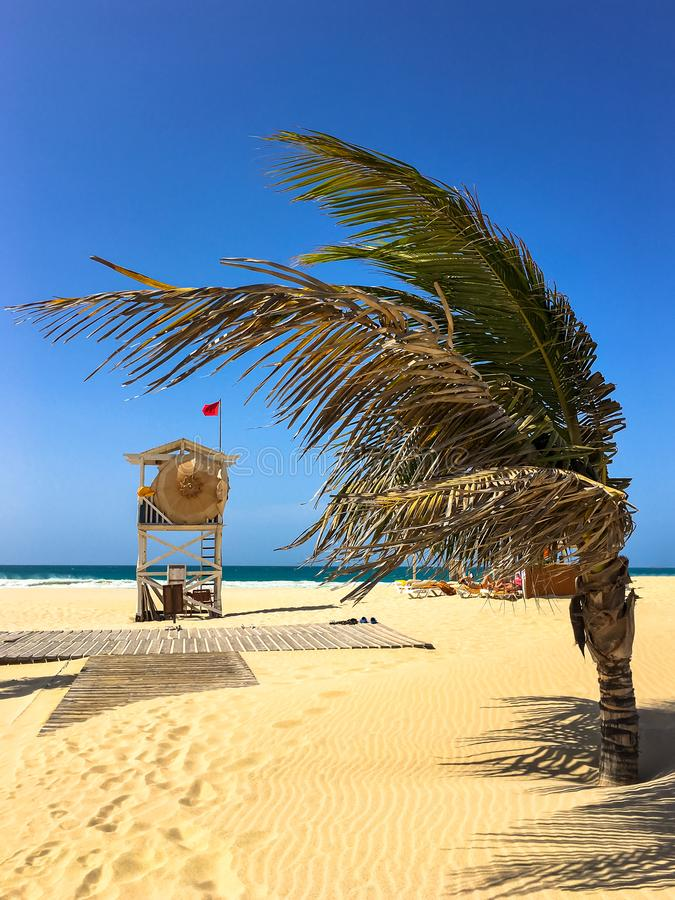 Palm tree and beach guard at Praia de Chaves, Boa Vista royalty free stock image