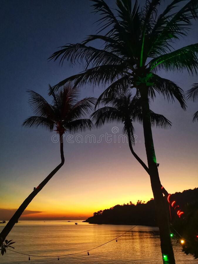 Palm tree on a beach in Koh Tao, Thailand. View of the royalty free stock photos