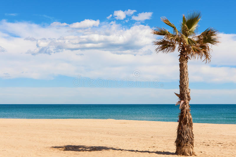 Download Palm tree on the beach stock photo. Image of cloud, paradise - 33392124
