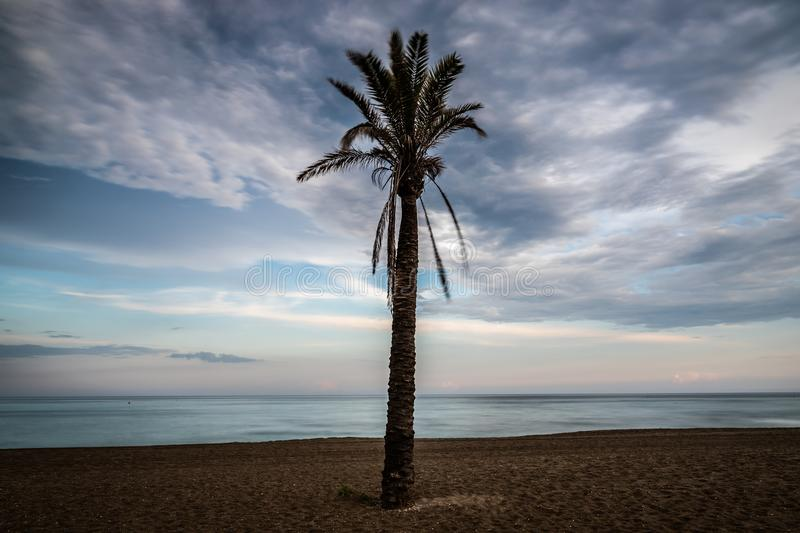 Palm tree on the beach at sunset. royalty free stock photo