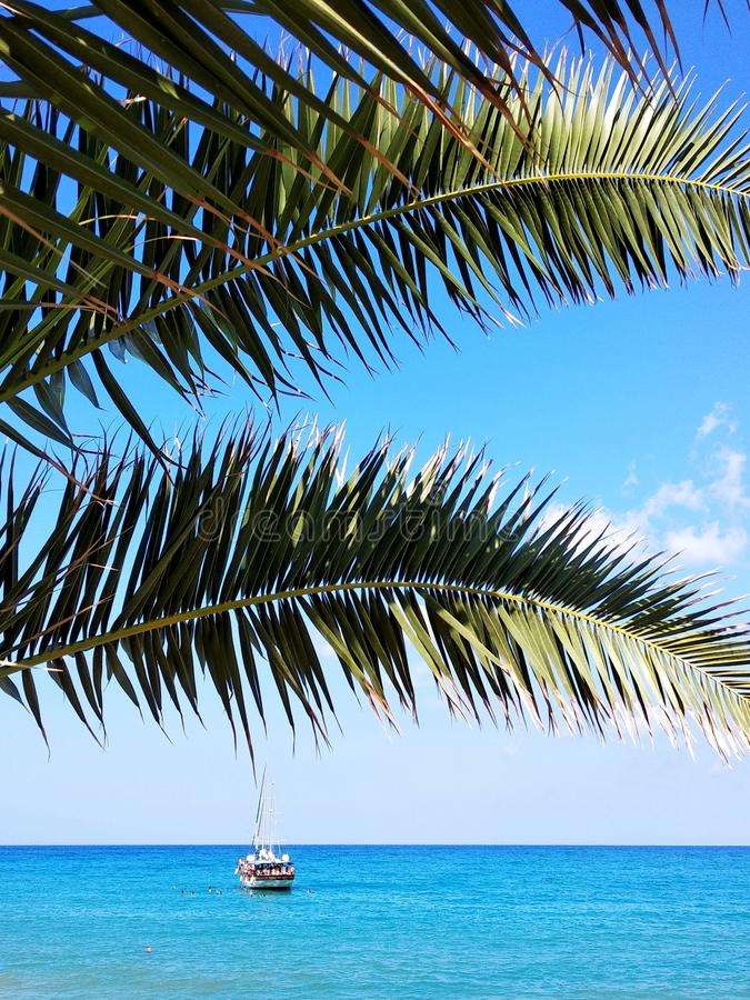 Palm tree and sea stock photos