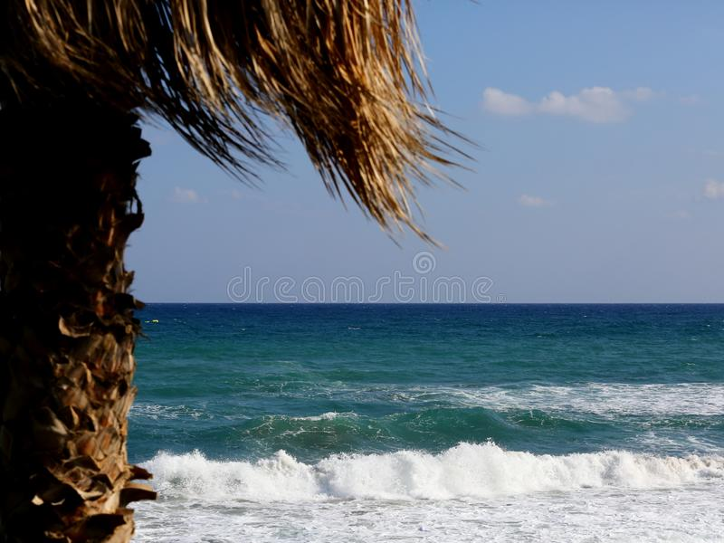 Palm tree and sea stock image