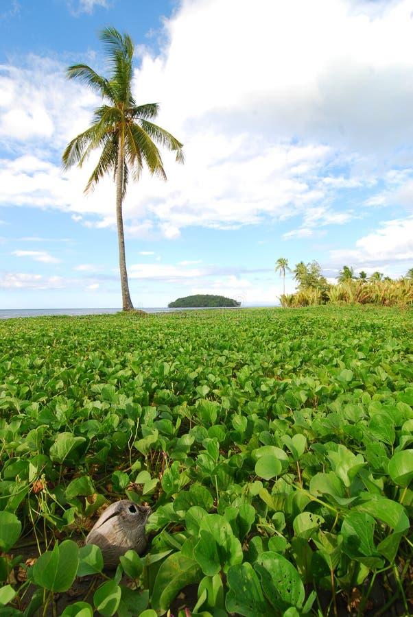 Palm Tree And Beach Vegetation Royalty Free Stock Photos
