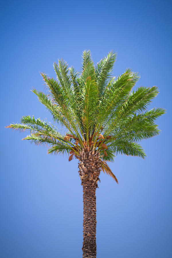 Download Palm tree stock photo. Image of beauty, clean, background - 32426394