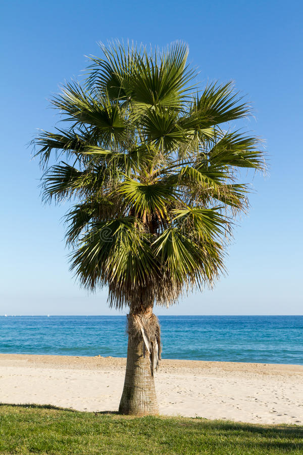 Download Palm Tree Royalty Free Stock Images - Image: 30960209