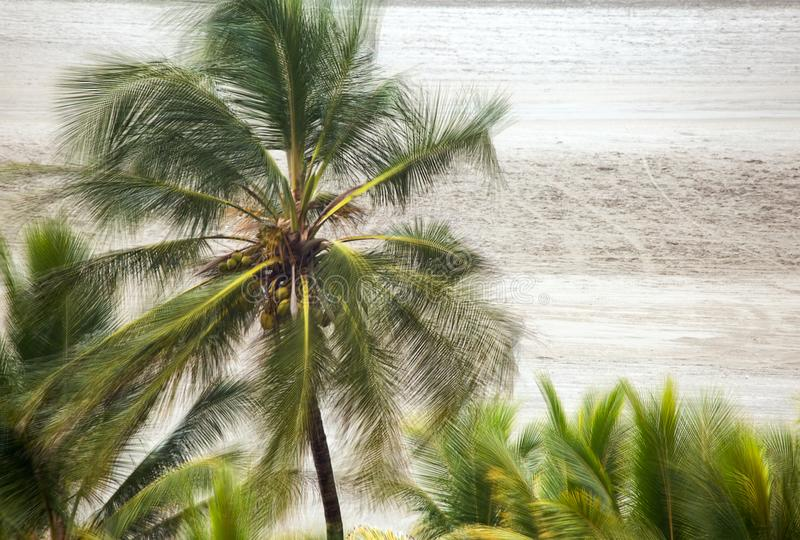 Palm tree been blown by a strong wind stock image
