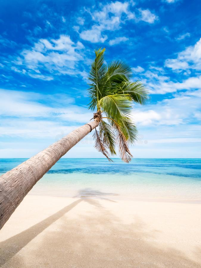 Palm tree bending over turquoise sea on a paradise beach stock photos