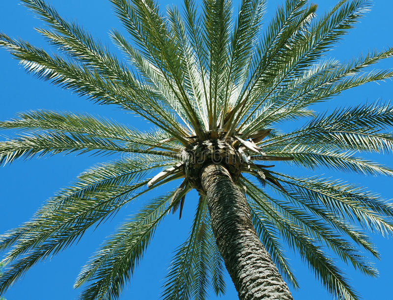 Download Palm tree and blue sky stock image. Image of branches - 1903629