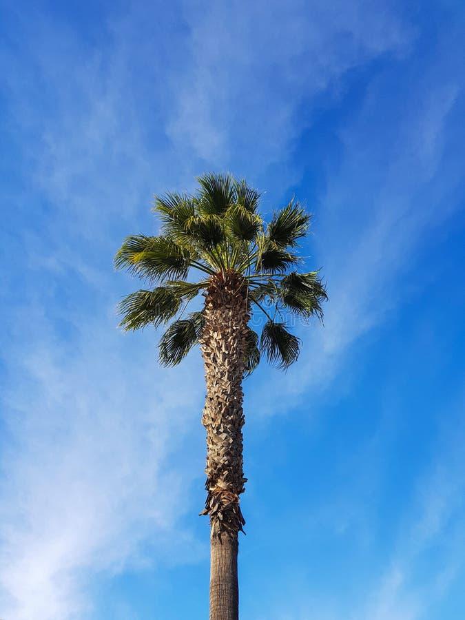 Palm tree. Blue sky background royalty free stock photo