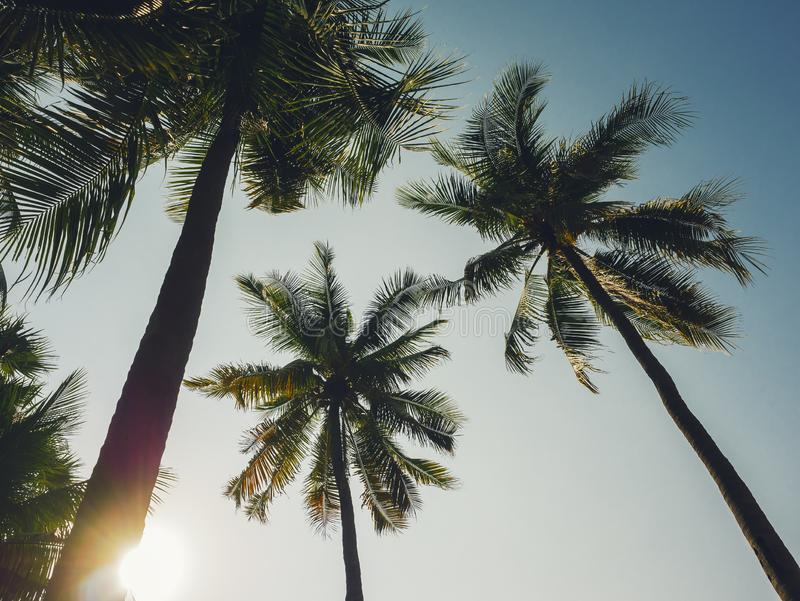 Palm Tree with Blue sky Beach Vacation Outdoor Summer holiday royalty free stock images