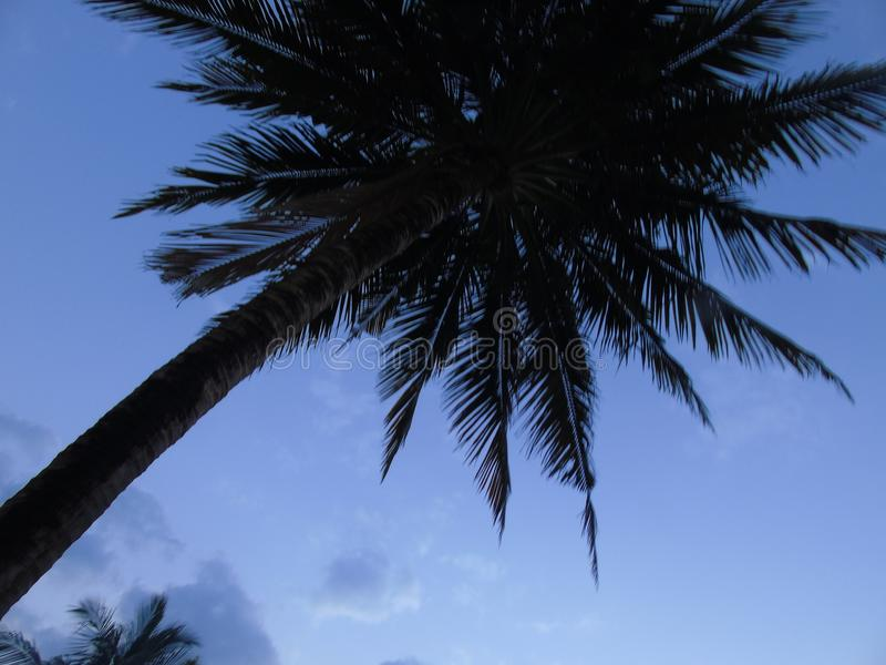 Palm tree in blue sky royalty free stock photo