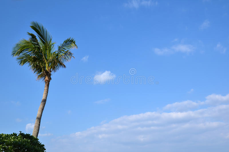 Download Palm tree stock image. Image of nature, resort, relaxation - 36327525