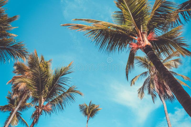 Palm tree and blue sky. Tropical paradise postcard royalty free stock image