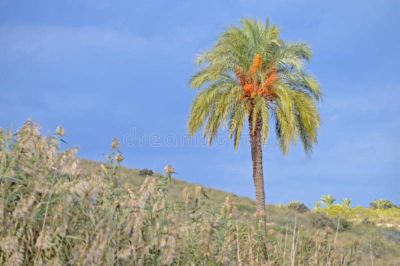Palm Tree With Blurred Surrounings stock photography