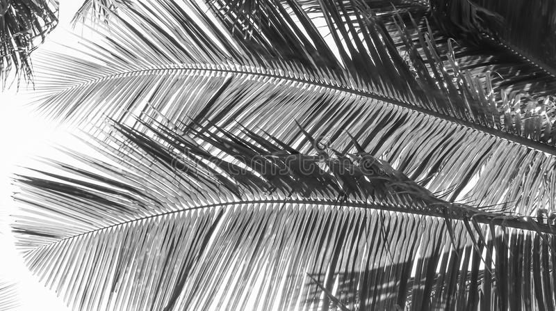 Palm tree branch against the light stock photography