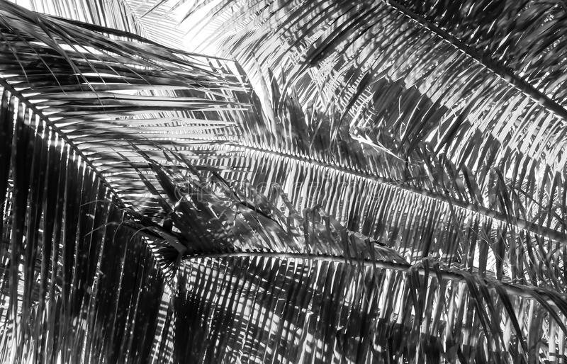Palm tree branch against the light royalty free stock photo