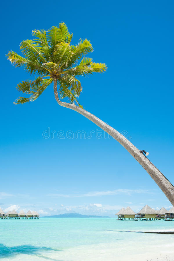 Palm tree with bungalows over water in Bora Bora royalty free stock images