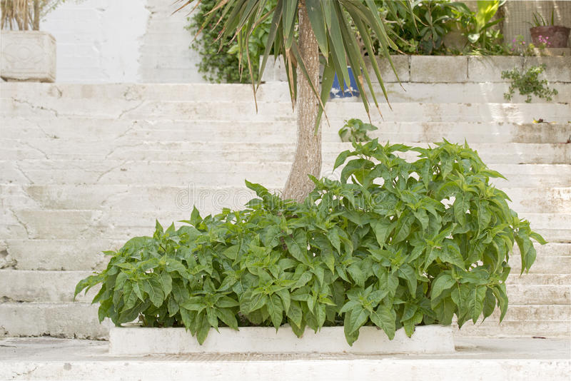 Palm tree and bushes growing on the concrete stairs royalty free stock photo