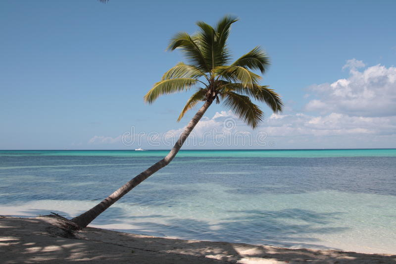 Download Palm Tree On The Caribbean Beach Stock Photography - Image: 11684072