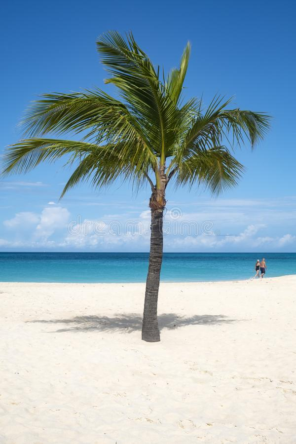 Palm Tree on a Caribbean Beach and Couple in the Background stock photos