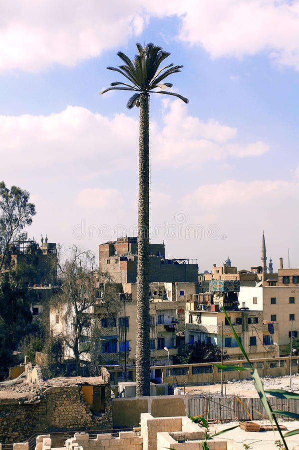 Palm tree cell tower royalty free stock photography