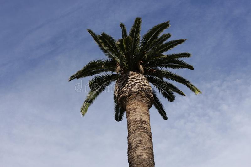 Palm Tree in Citadel Parc. This photograph was taken on a trip to the Parque de la Ciudadela and although it was surrounded by beautiful landscapes and full of royalty free stock photography
