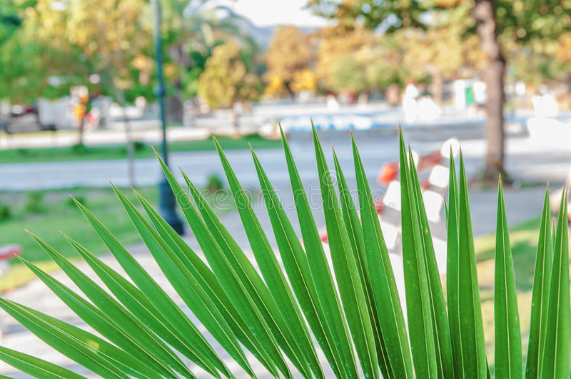 Palm tree close with blurr promenade background. CLOSE royalty free stock photos