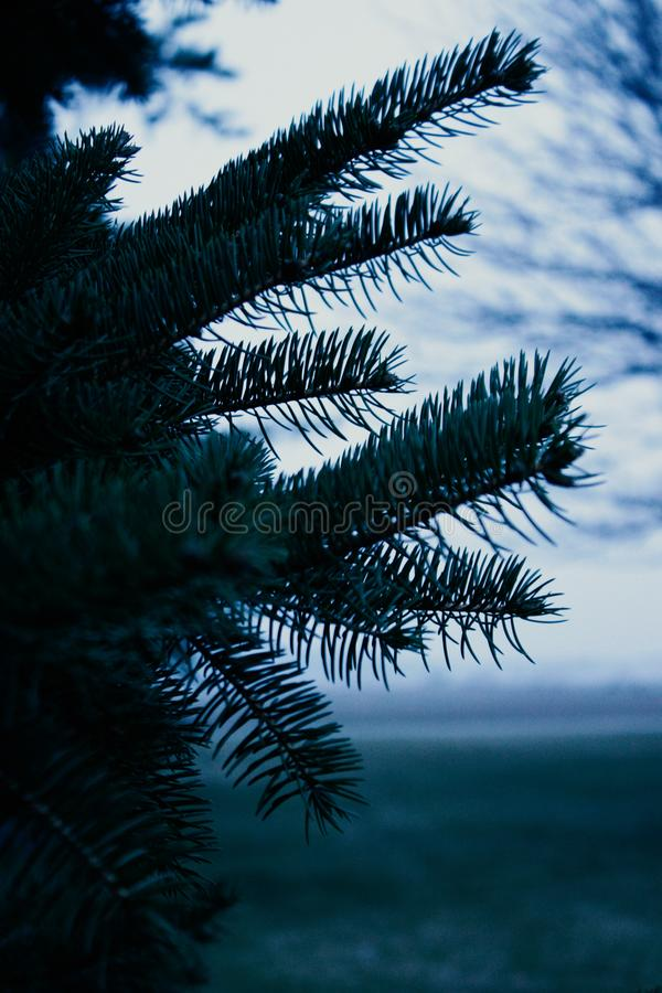 Palm Tree Close-up Photo royalty free stock photos