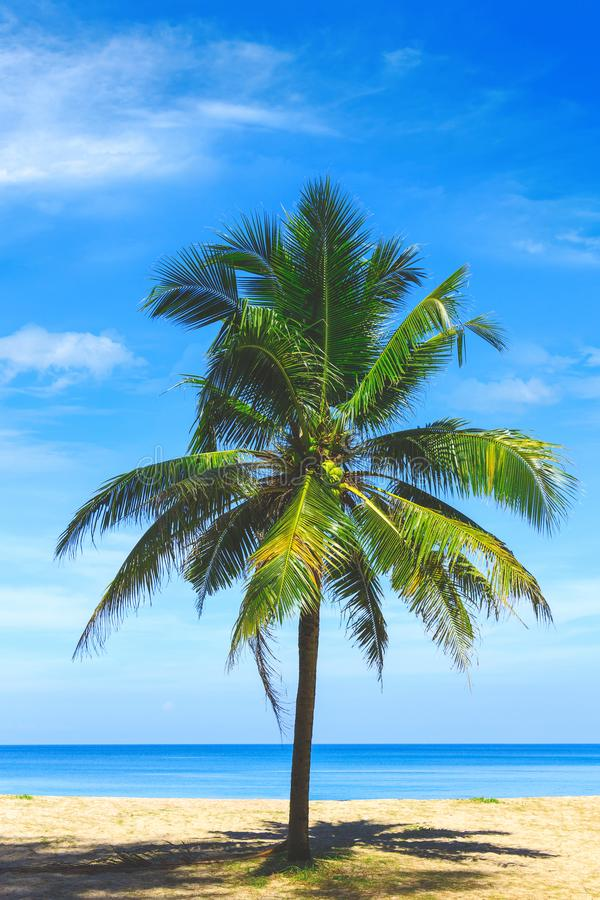 Palm tree close up view. Picturesque view of Andaman sea in Phuket, Thailand. Seascape. Tropical beach at the exotic island. Sea resort. World tour stock photo