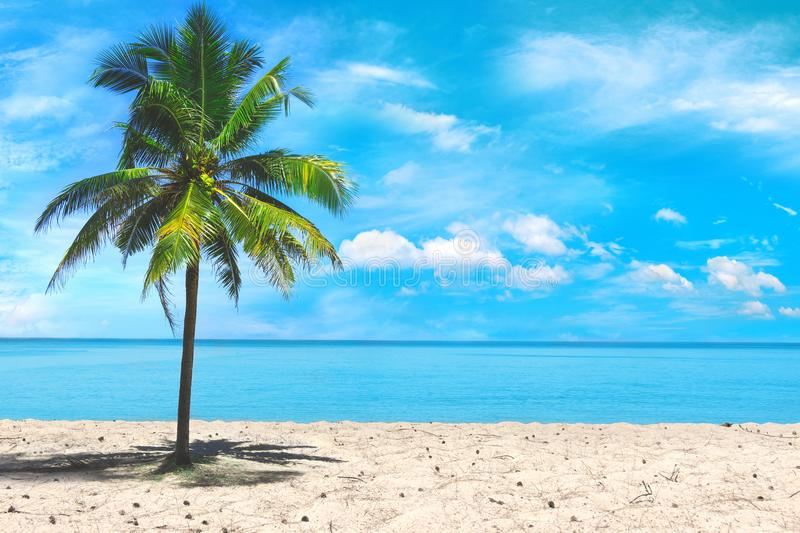 Palm tree close up view at the picturesque sky background. Tropical beach at the exotic island. Advertising of travel company. stock photos