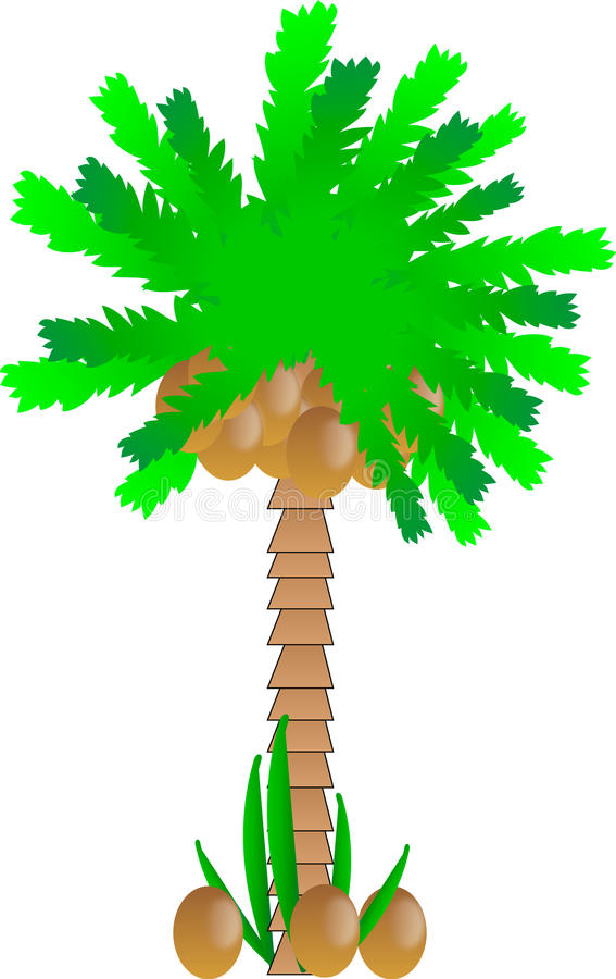 Download Palm tree with coconuts stock vector. Illustration of frond - 20401096