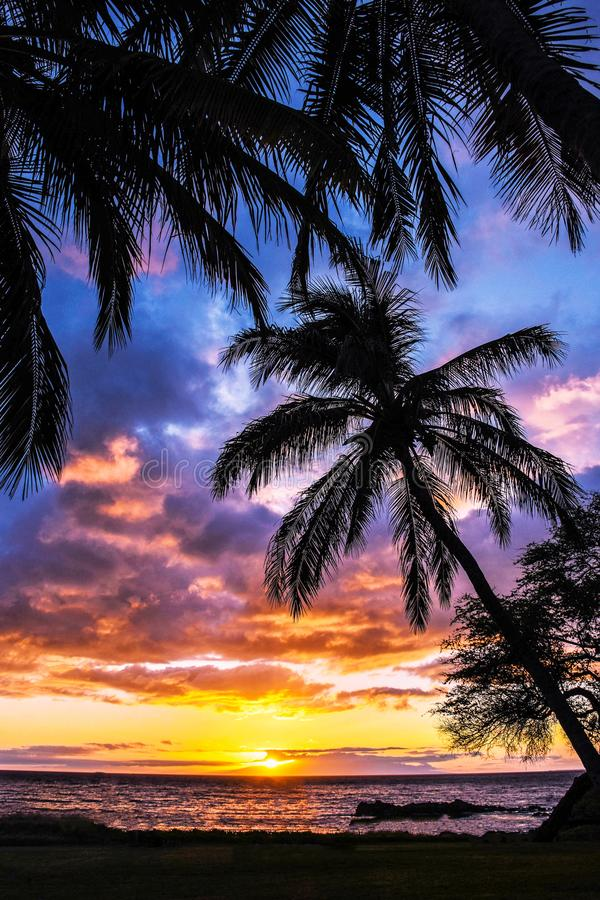Palm Tree Colorful Sunset Maui Hawaii stock photo