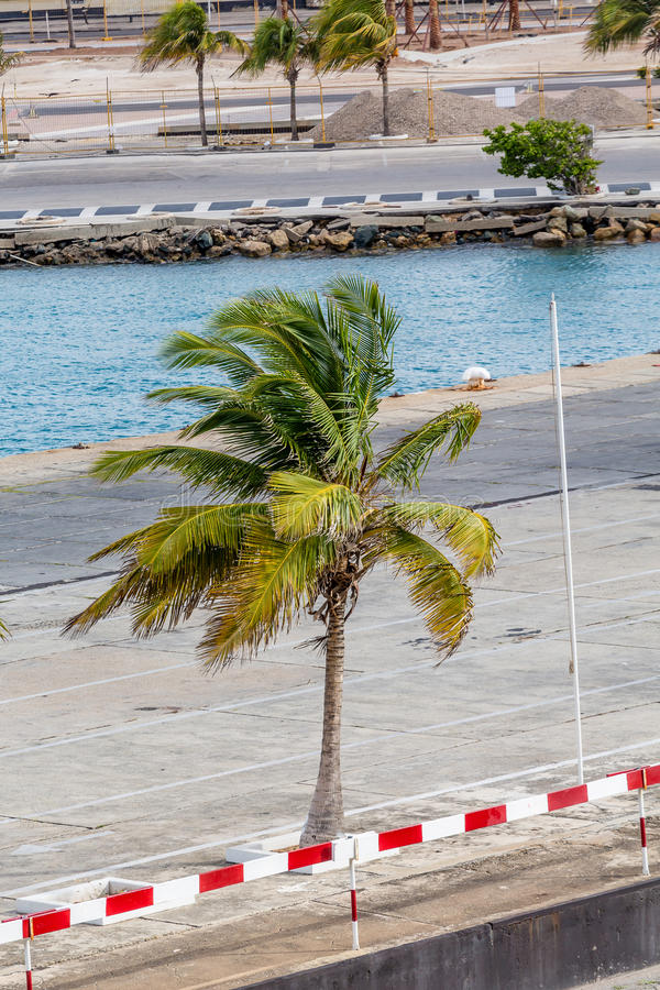 Palm Tree on Concrete Dock stock images