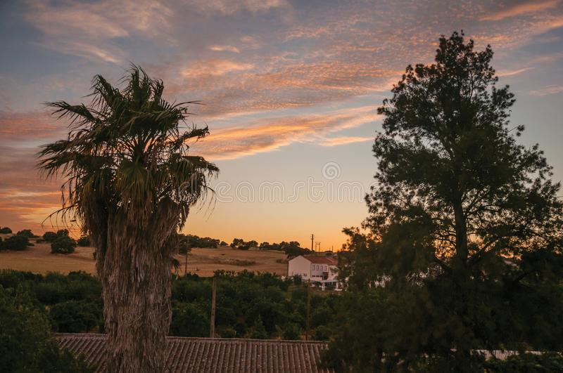 Palm tree and cottage at sunset on a farm. Countryside landscape with leafy palm tree, fields and cottage at sunset dusk, on a farmstead near Elvas. A gracious stock photos