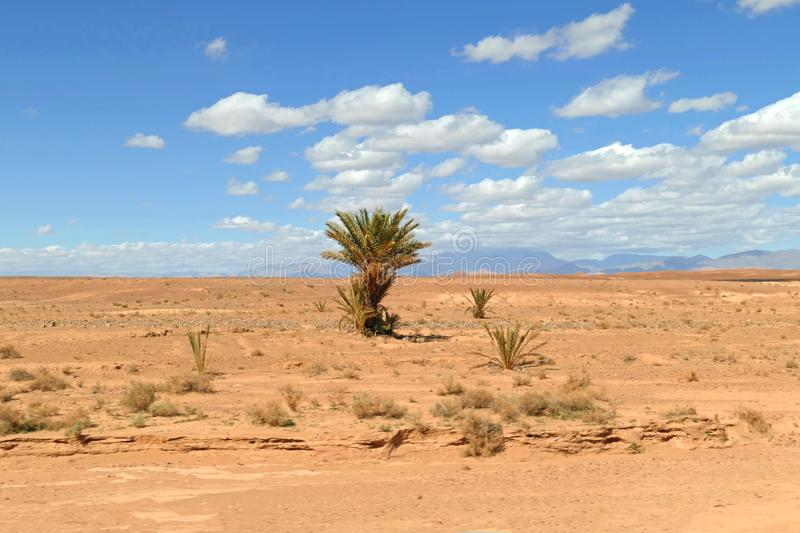 Palm tree in the desert - Street of the Kasbahs, Sahara, Morocco royalty free stock image