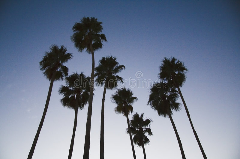Palm Tree Eight at Sunset royalty free stock photography