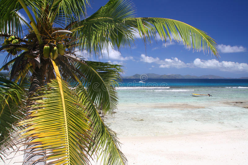 Palm tree on empty beach