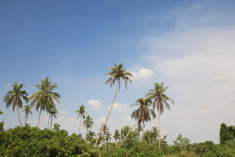 Download Palm Tree Environment Against Blue Sky Stock Photo - Image: 24750110