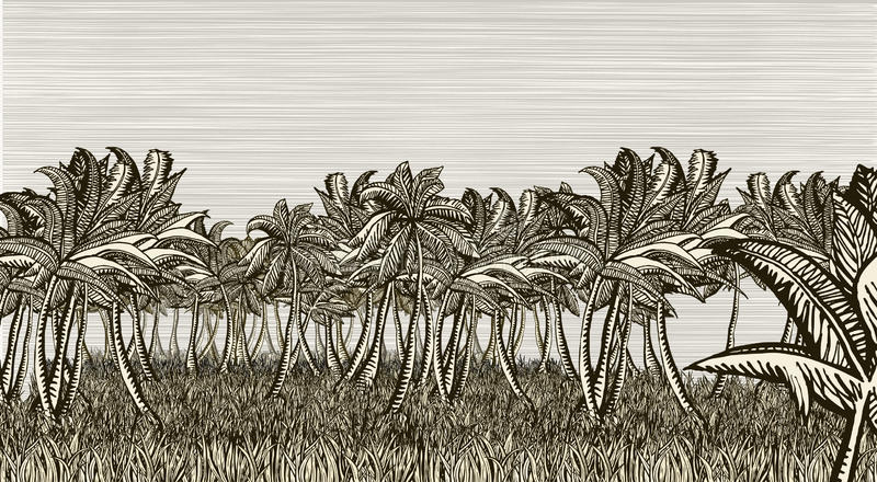 Download Palm tree field stock vector. Illustration of graphic - 16906028