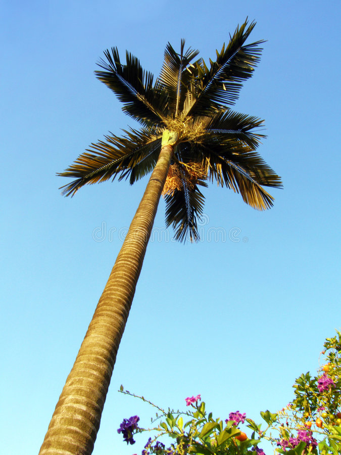 Free Palm Tree & Flowering Shrubs Stock Images - 5068144