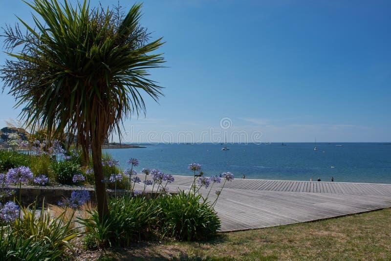 palm tree at the Atlantic in Benodet, France stock photo