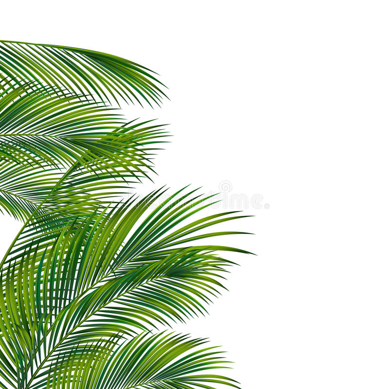 Palm tree foliage royalty free illustration