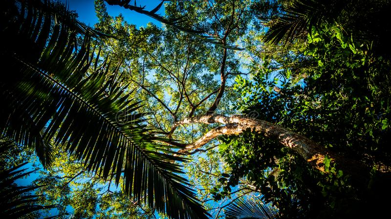 Palm Tree In Forest Free Public Domain Cc0 Image