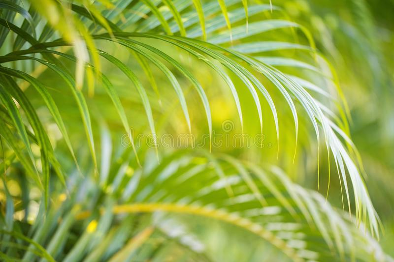 Palm Tree frond stock image
