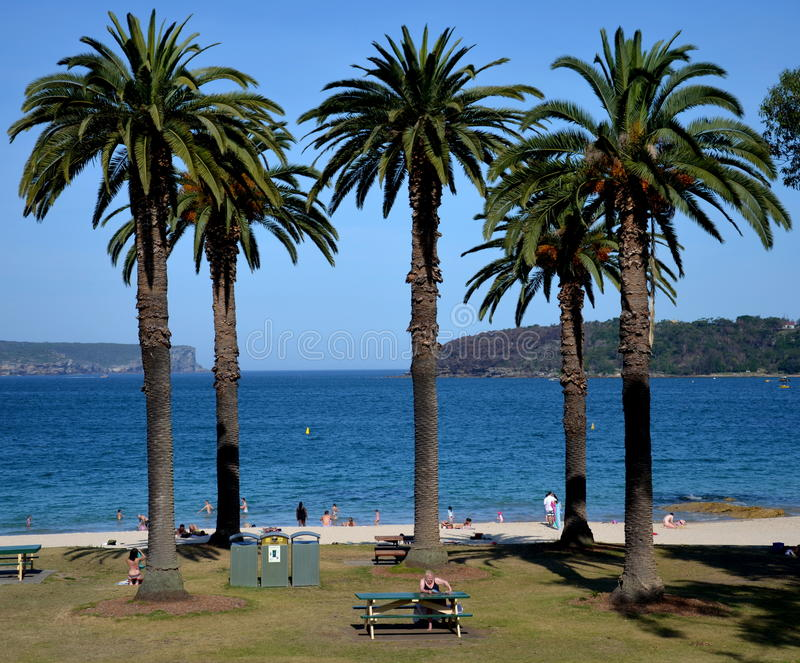 Palm tree in the front, South Head and North Head in the background. royalty free stock image